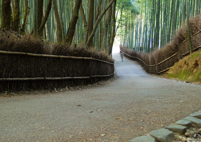 Bamboo Grove Path