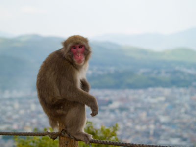 Monkey and Kyoto