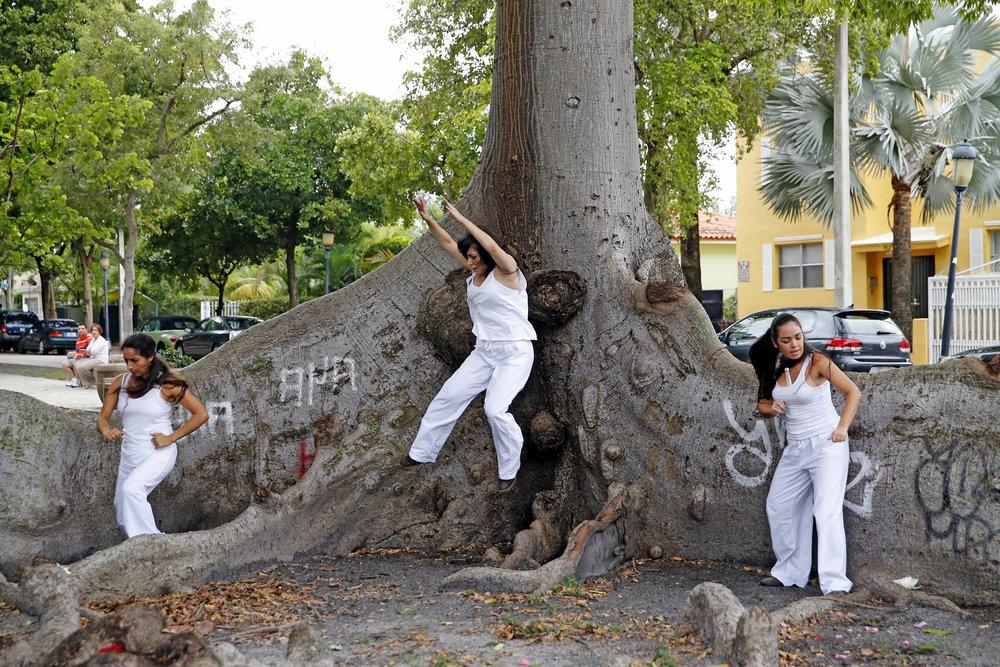 KNIGHT TREE 5.jpg