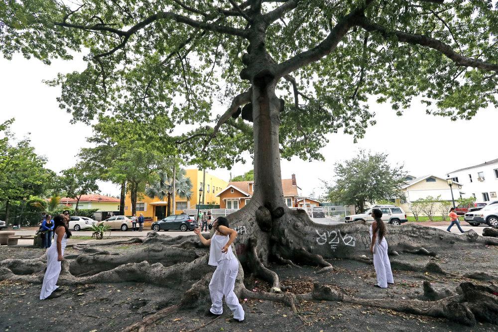 KNIGHT TREE 21.jpg