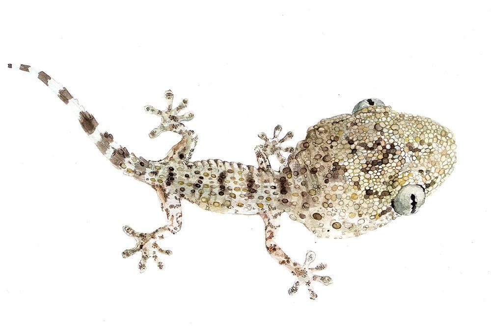 LSG_Reptiles_Hidrocefalia.jpg