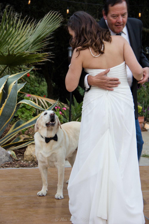 Maternity&wedding-38.jpg