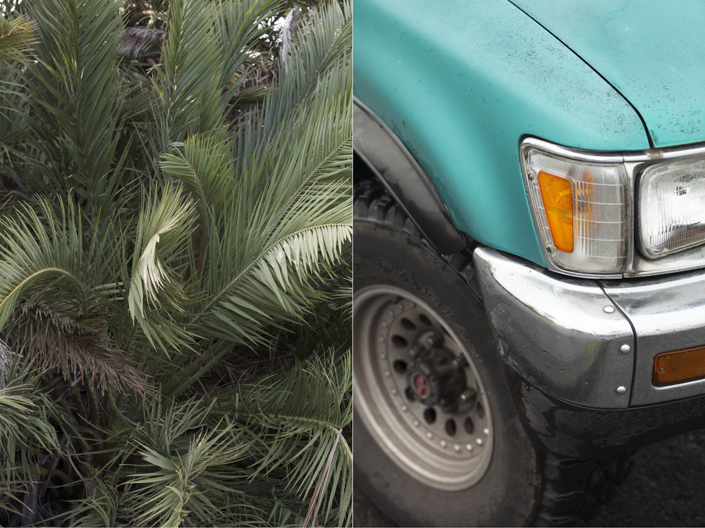 DORN&CARBONE_WEB_HAWAII_PALM_TIRE.jpg