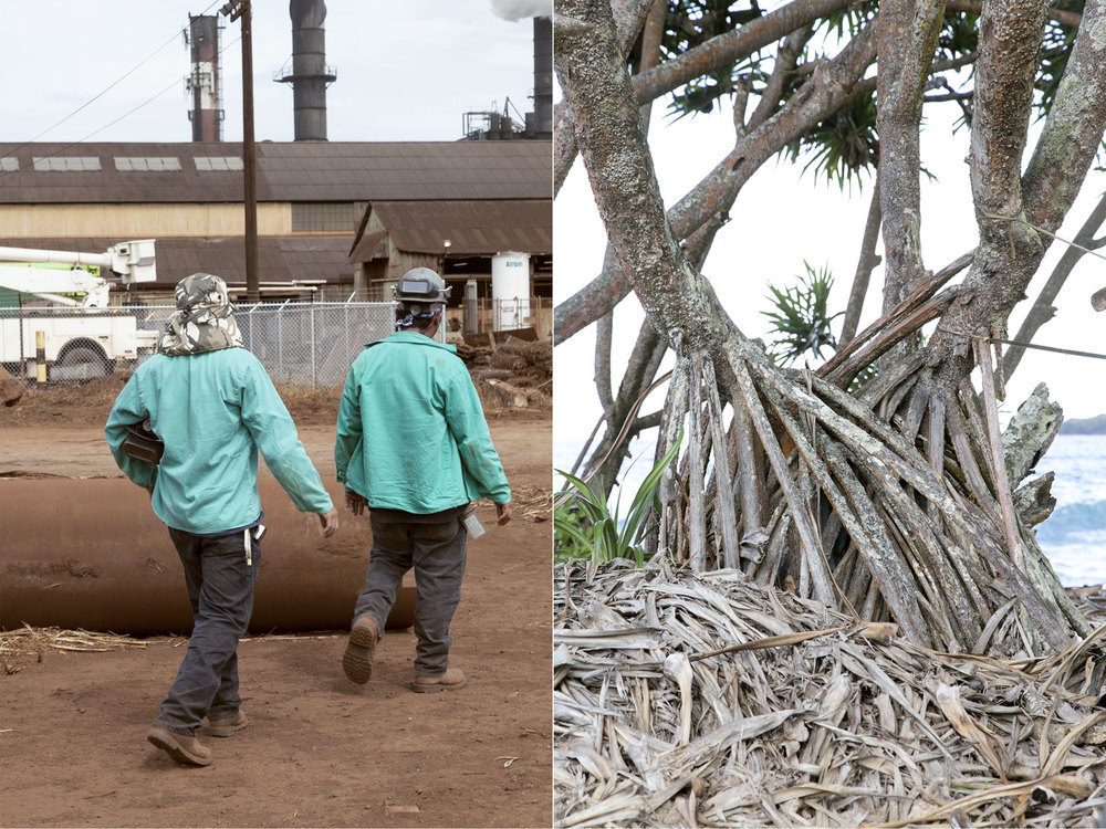 DORN&CARBONE_WEB_HAWAII_WORKERS_TREE.jpg