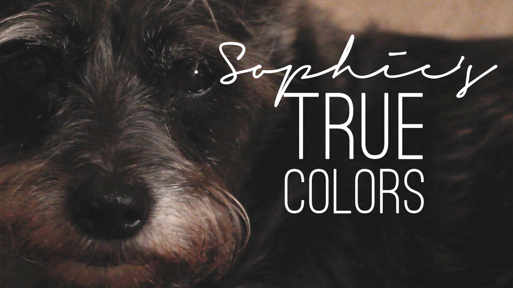 Sophie's+True+Colors+Thumbnail.jpg