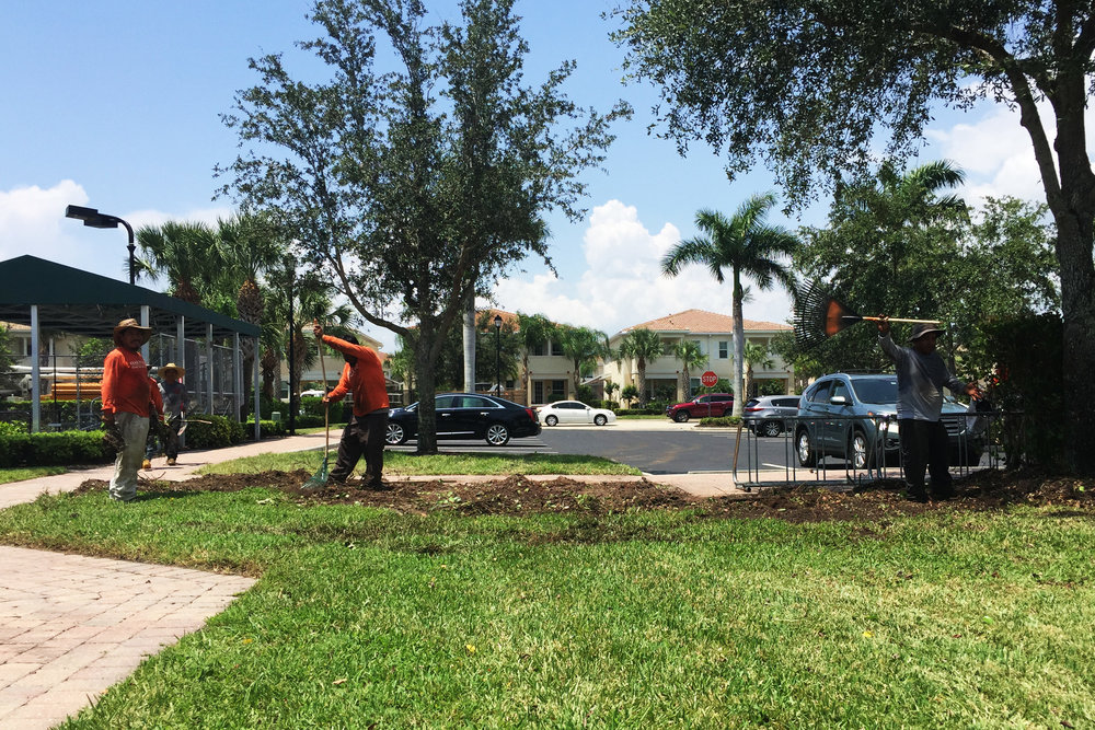 Damaged bushes have been removed in preparation for the extension of pavers and bike racks.