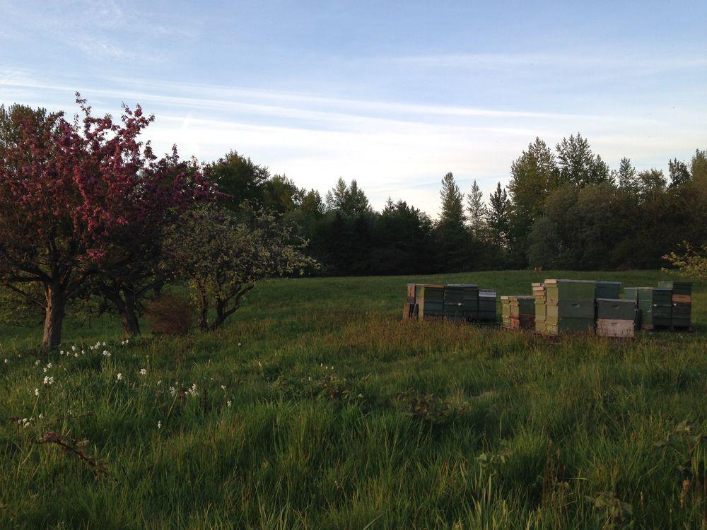 Bee Yard in Spring