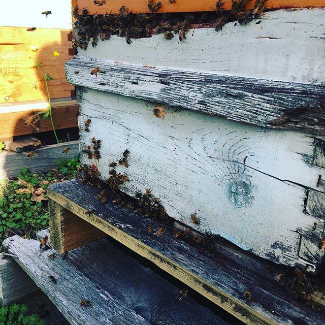 #Sunny days . . . . . . #cascades #beeworksfarm #honey #beekeeper #honeybees #nature #beesofinstagram #bee #PNW #Bellingham #farmlife #rawhoney #savethebees #honeybee #honeycomb #beelove #beekeeping #lovenature #eatrealfood #rawfood #food52 #saveur #bonappetite