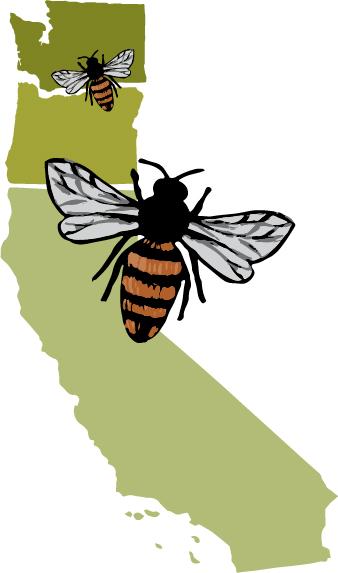 #farmersmarket #bhamfarmersmkt #communityfoodcoop #cascades #beeworksfarm #honey #beekeeper #honeybees #nature #beesofinstagram #bee #PNW #Bellingham #farmlife #localhoney #mountbaker #eatlocal #rawandunfiltered #rawhoney #raw #unfiltered #savethebees #honeybee #honeycomb #beelove #beekeeping #lovenature #eatrealfood #rawfood #foods52 #saveur #bonappetite