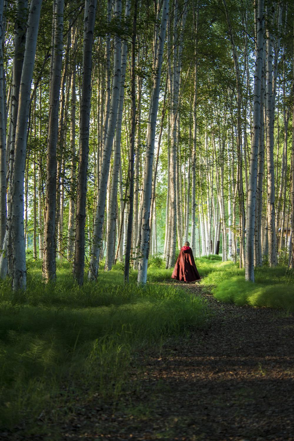 red in woods.jpg