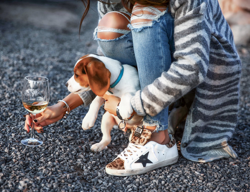 Detail photo cute puppy Golden Goose Sneakers in Valle de Guadalupe