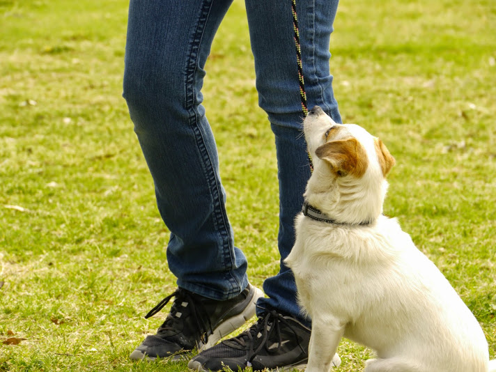 Dog training in tucson az, tucson dog training, tucson dog trainer