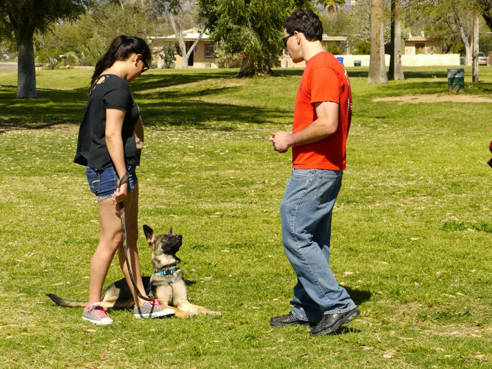Dog Training in Tucson Arizona