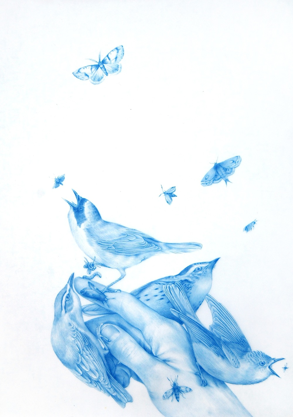 ZACHARI LOGAN, Perch 2, from Wild Man Series, 2015, blue pencil on Mylar, 12 x 9 inches