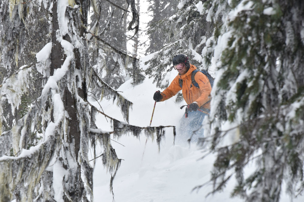 Guided skiing on the Powder Highway.