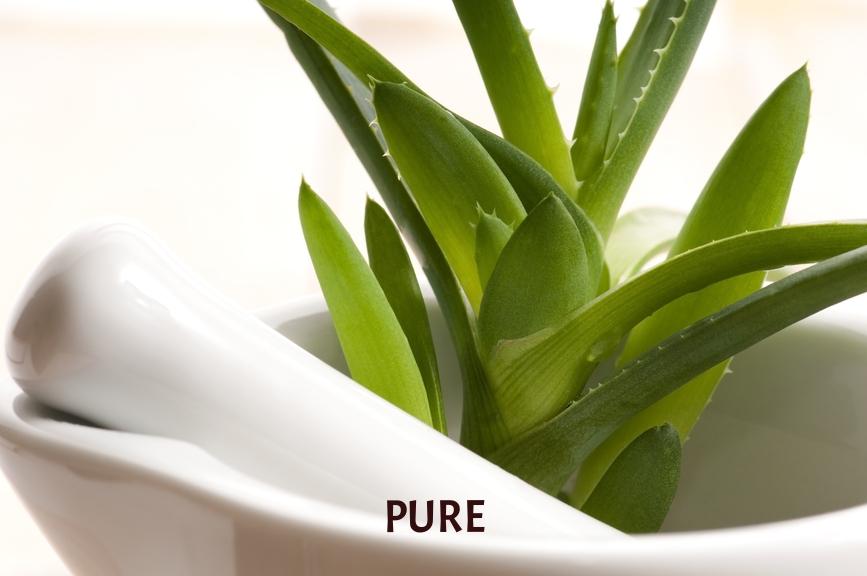 aloe plant.jpg