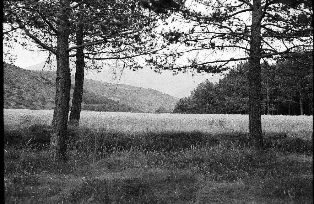 Olle_Joan_Fineart_Leica1-2.jpg