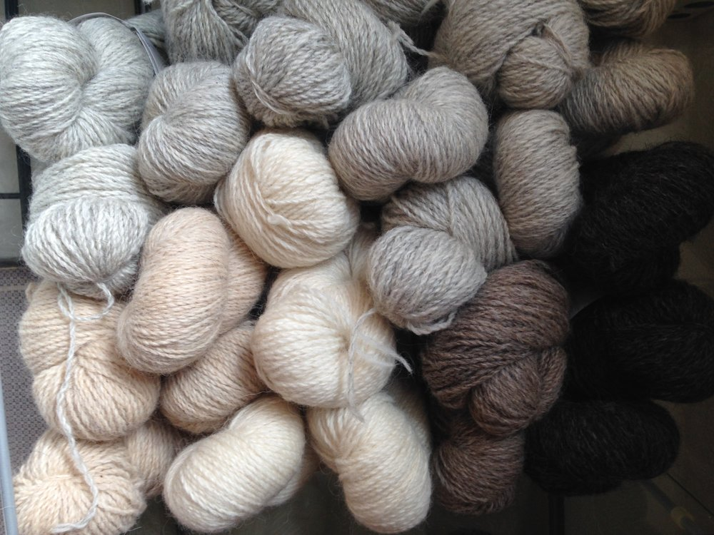 Skeins of Rockin' Stockins yarn in the shop, ready to go home with you!