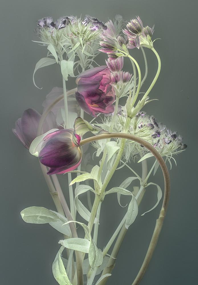 Florilegium |P12, 2018 80 x 56,5 cm | unique work