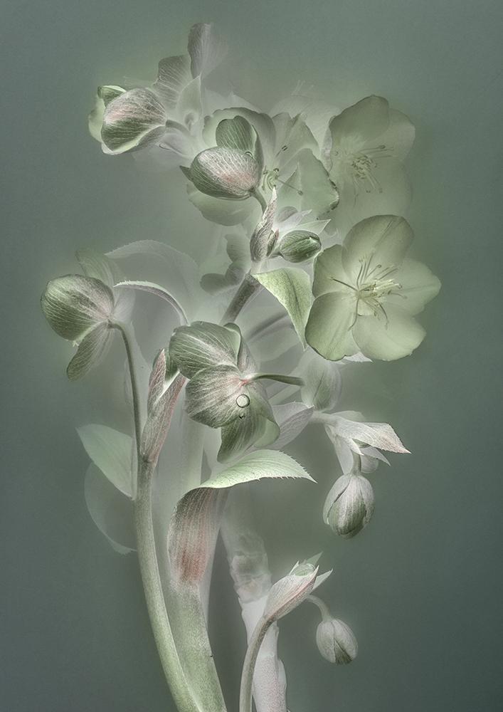 Florilegium |P21, 2018 80 x 56,5 cm | unique work