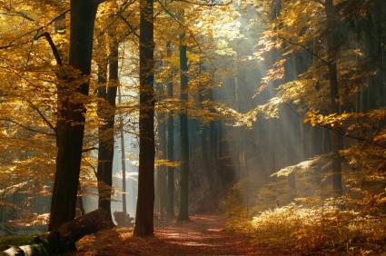autumnfunerals1.jpg