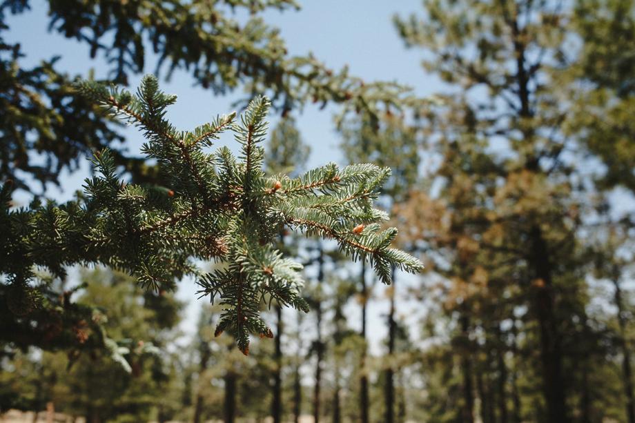 Session Nine Photography, Weddings, Greer, AZ-9(4)
