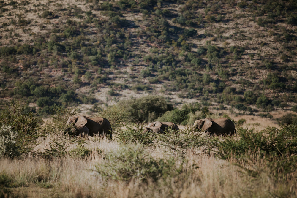 southafricanelephants