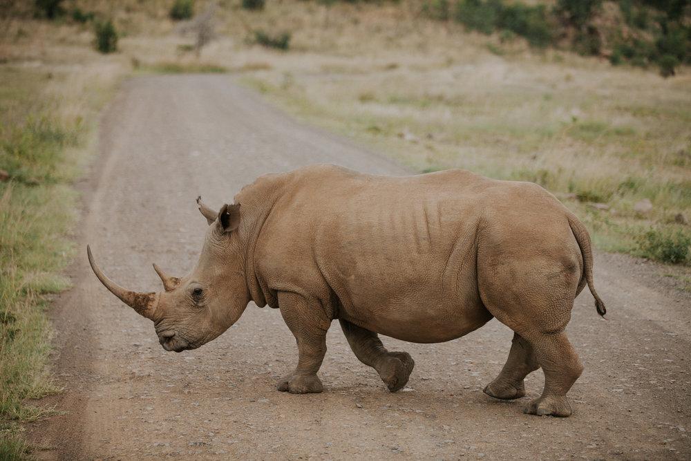 southafricarhino