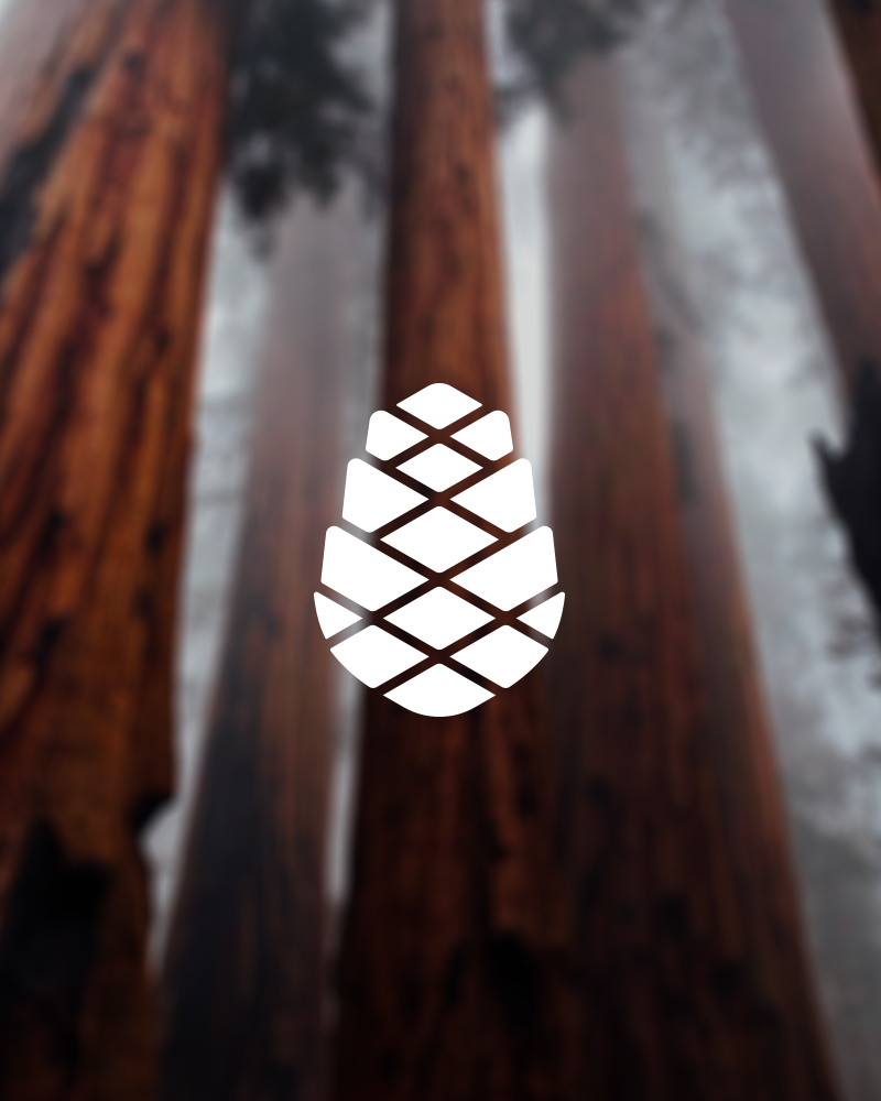 Pine Cone Foundation