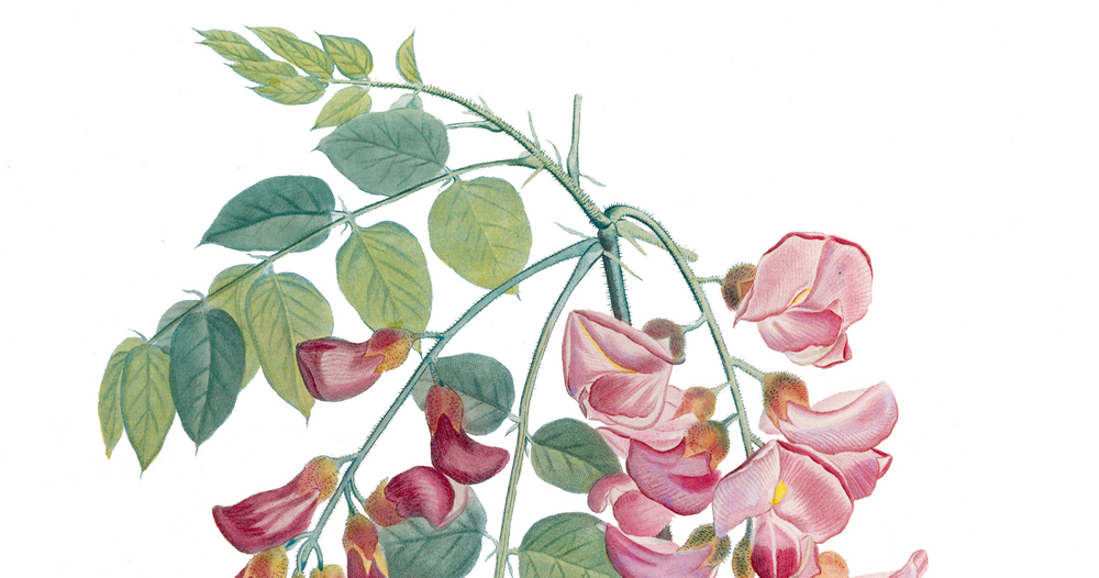 scientific wonders botanical prints from the lloyd library and museum u2014 zanesville museum of art