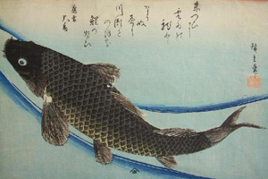 Website, Hokusai Coi, 200 x300.jpg