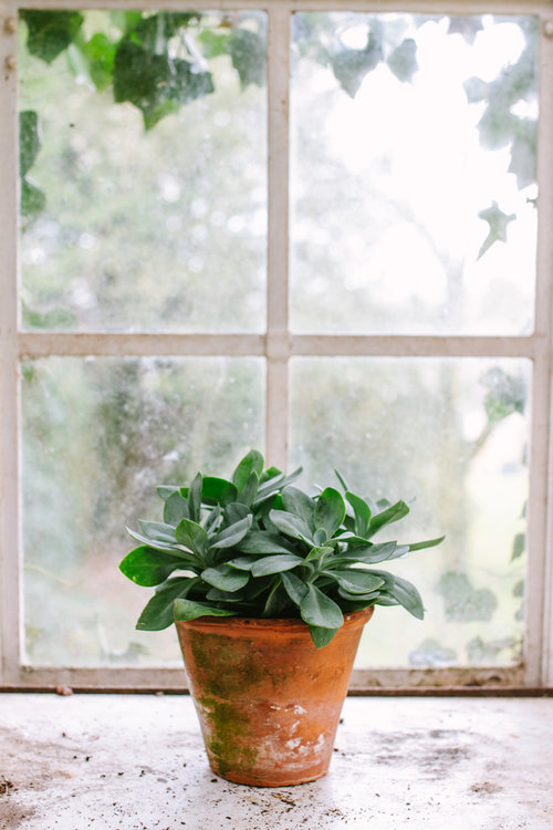 To Grow A Window Garden & Green Your Apartment This Spring