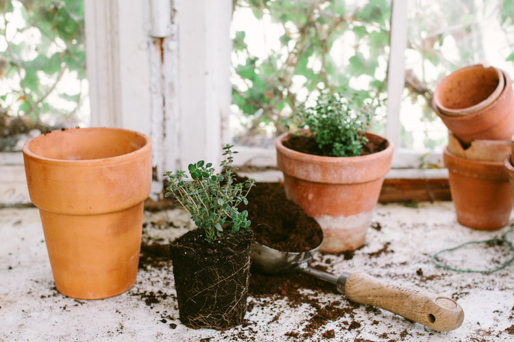 How To Grow A Window Garden & Green Your Apartment This Spring