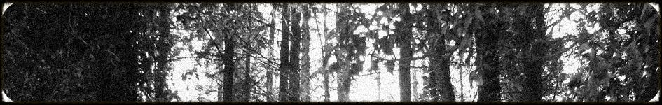 Woods Noise