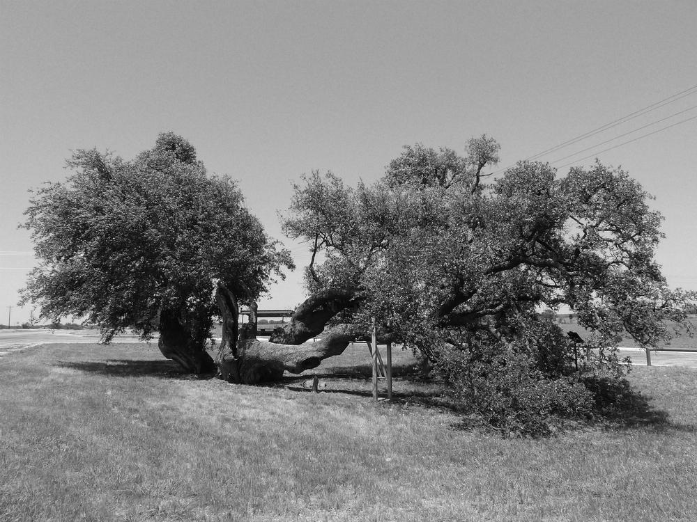 Halfway Oak Eastland, TX