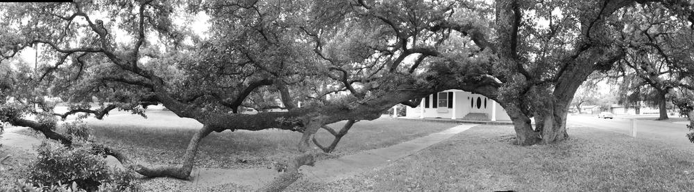 Live Oak, Uvalde, TX