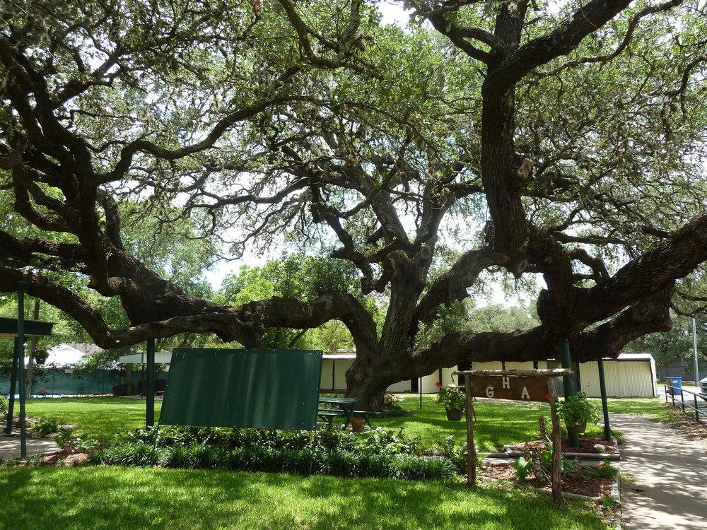 Hanging Tree.