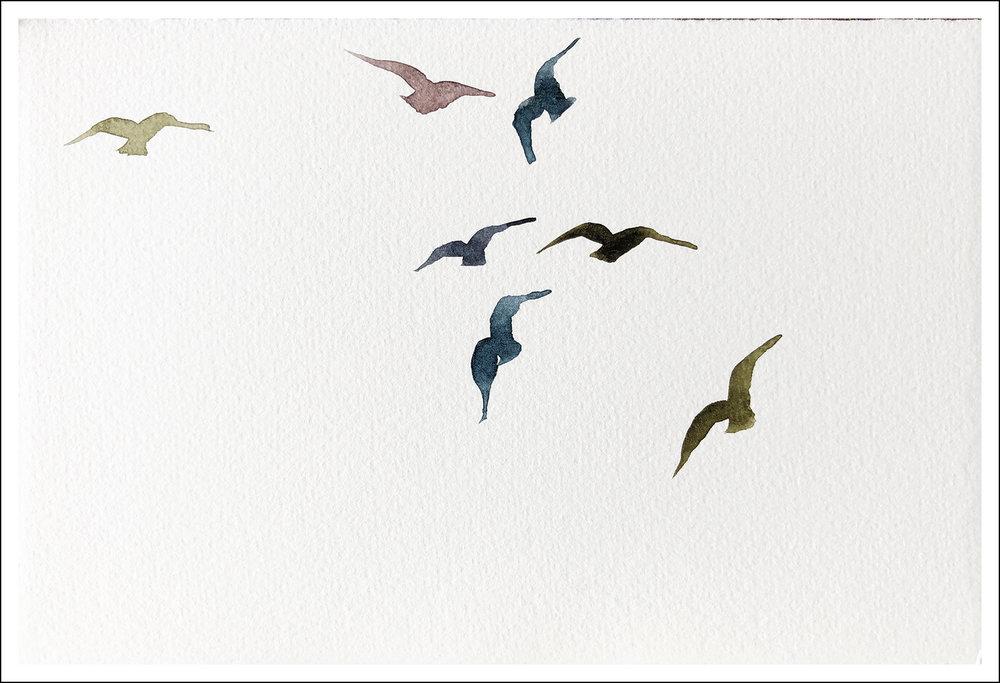 Bird XXVII