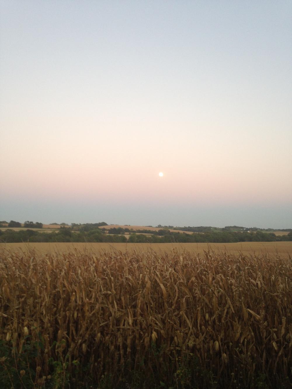 Beautiful-Fall-Moon-Over-Cornfield.jpg
