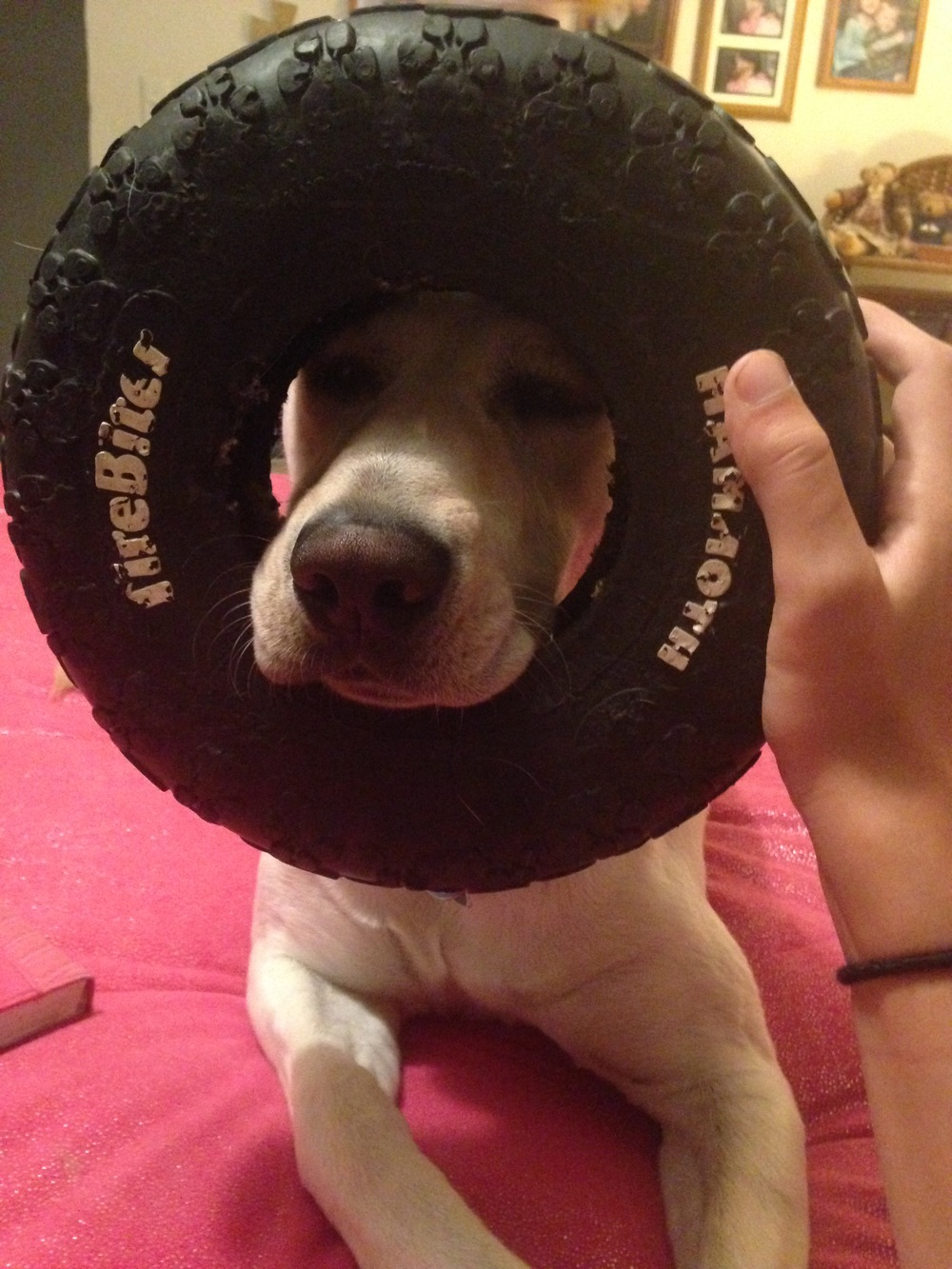 Willy-and-Tire.jpg