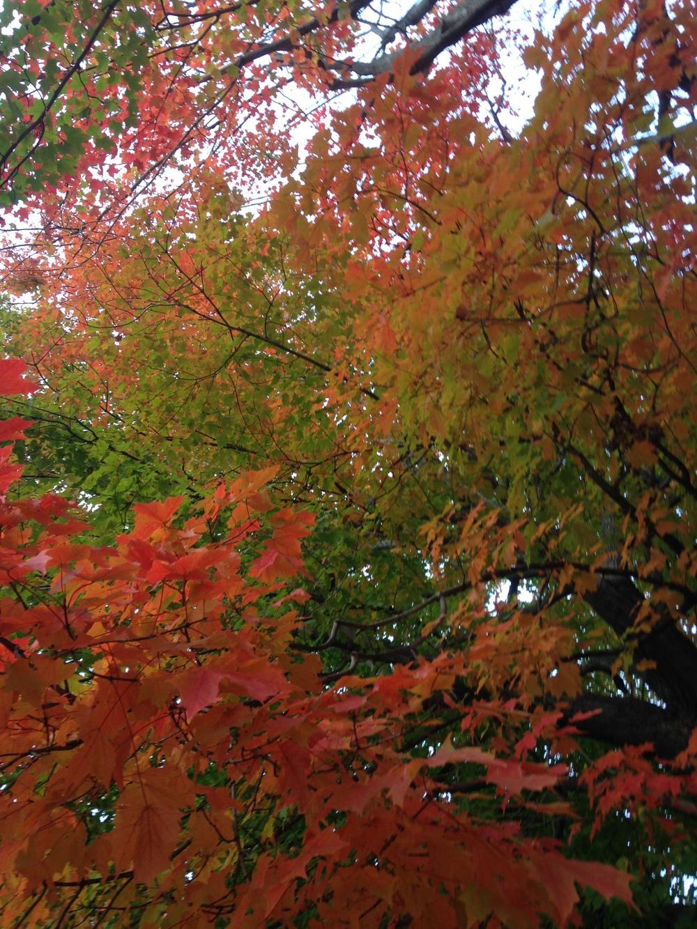 Striking-Fall-Leaves.jpg