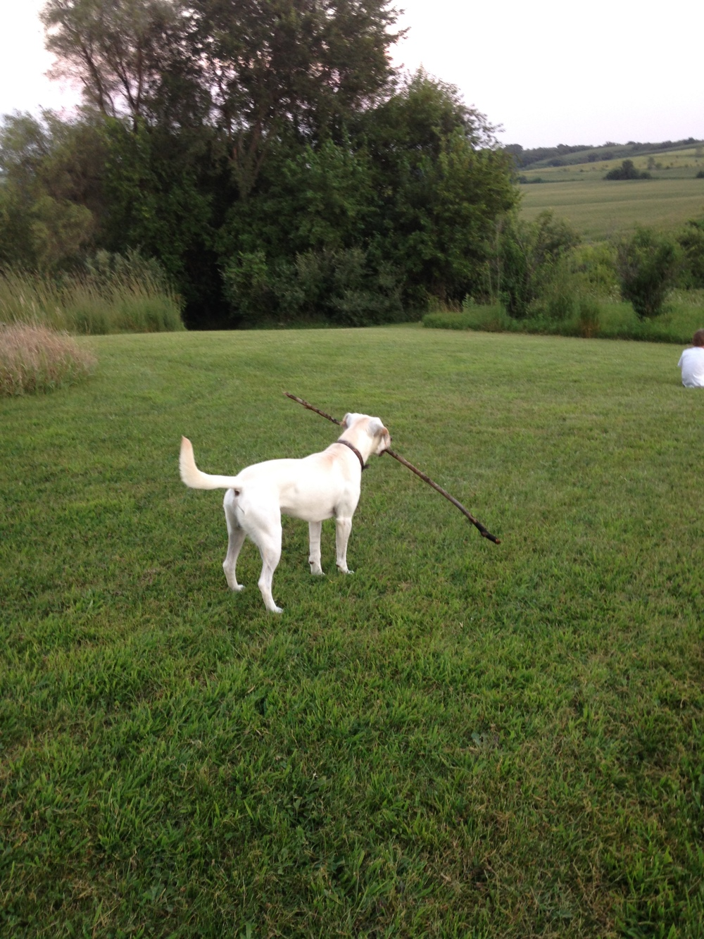 Willy-With-Huge-Stick.jpg