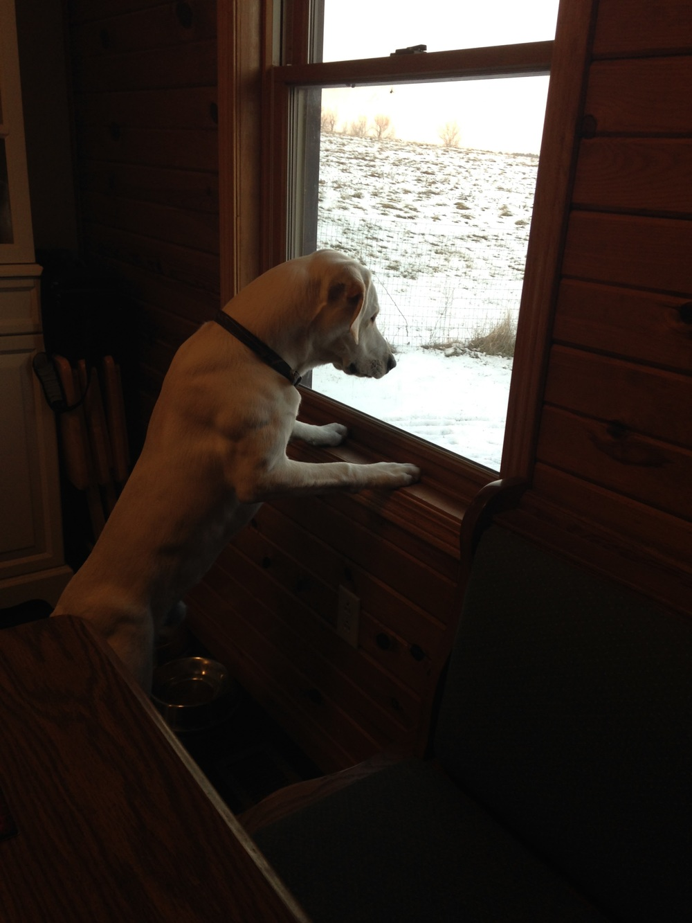 I was not kidding when I said he's a bird dog. He loves to harass the birds outside on our bird feeder.