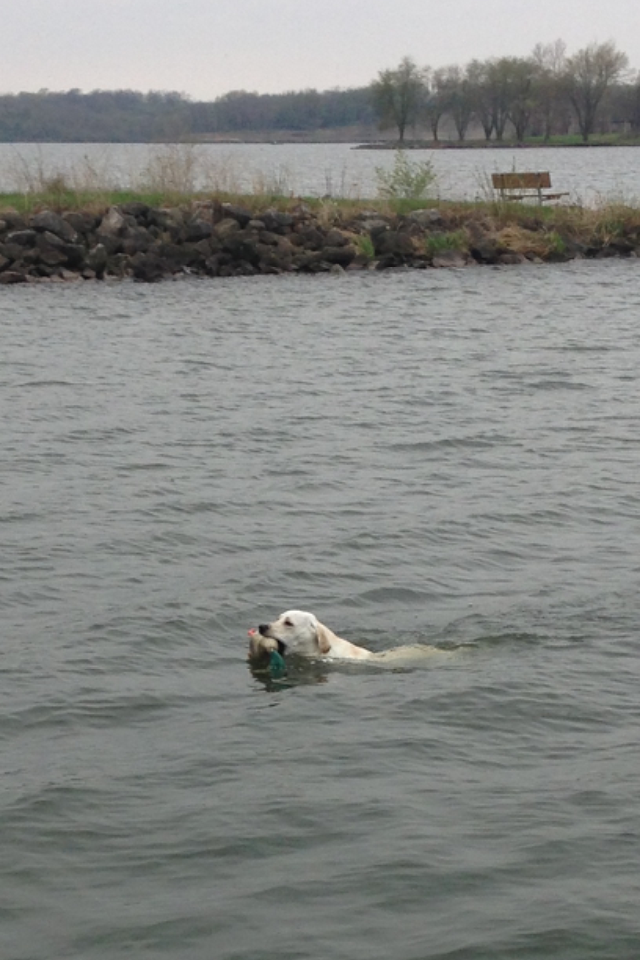 During the summer we really work on him with retrieving. We live near a lake, so it works out perfect to take his duck floater out and watch him swim to get it.