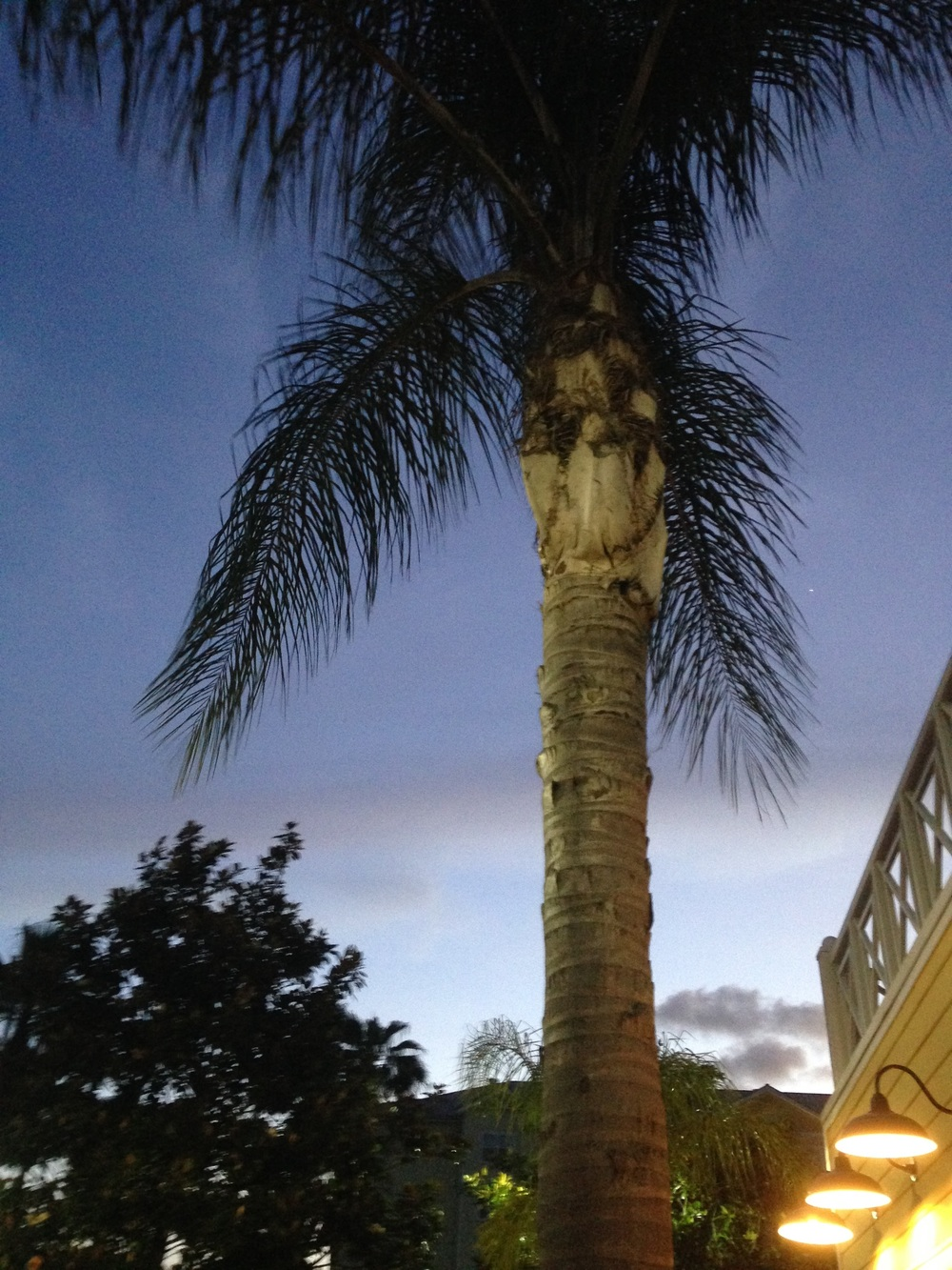 Florida-Palm-Tree.jpg