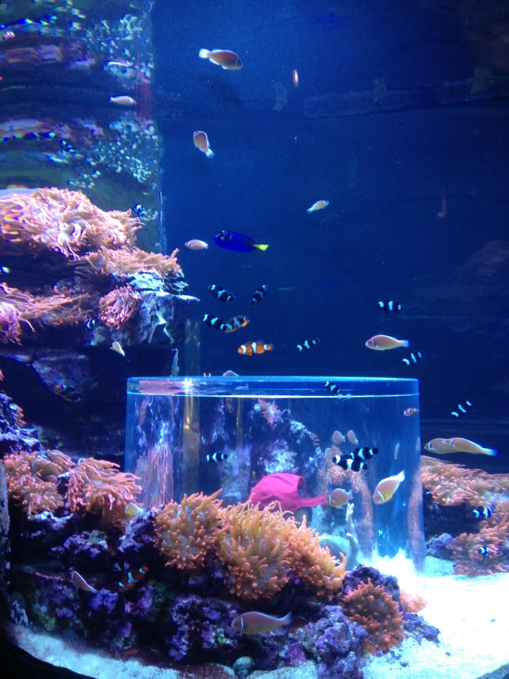 SeaWorld-Aquarium.jpg