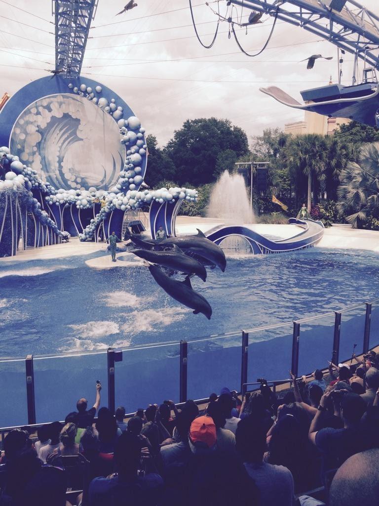 SeaWorld-Dolphins.jpg