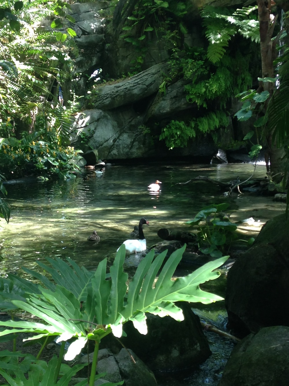 Animal-Kingdom-Ducks.jpg