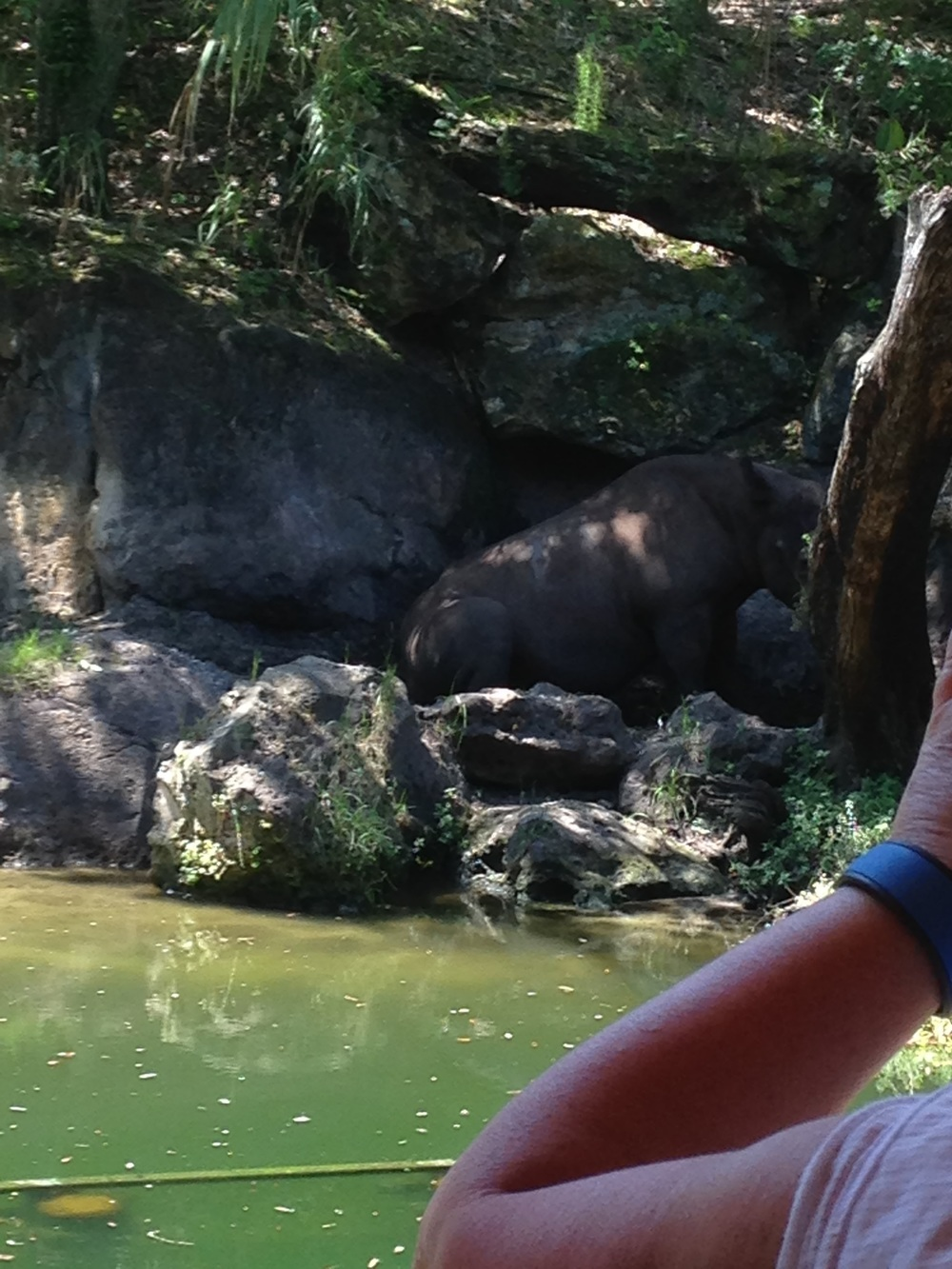 Animal-Kingdom-Hippo.jpg