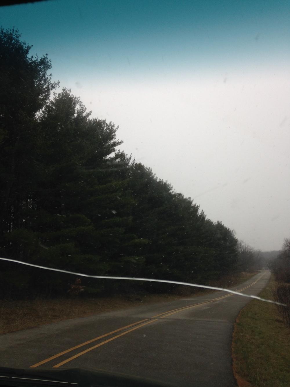 Trees-Snowing.jpg